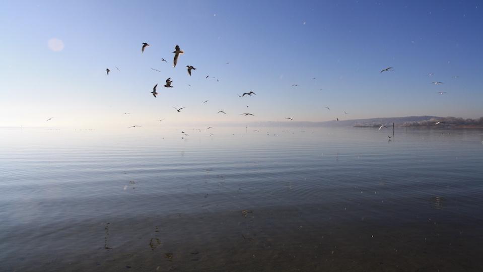 Hintergrund See Ammersee Freiheit Möwen Vögel Schwarm fliegen Winter blau Bayern Fond